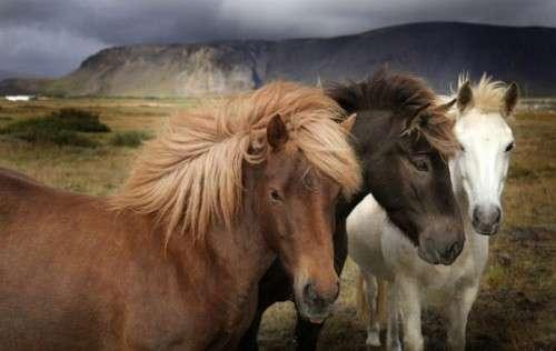 كل واحد يحط صورة حيوانه المفضل horses18.jpg